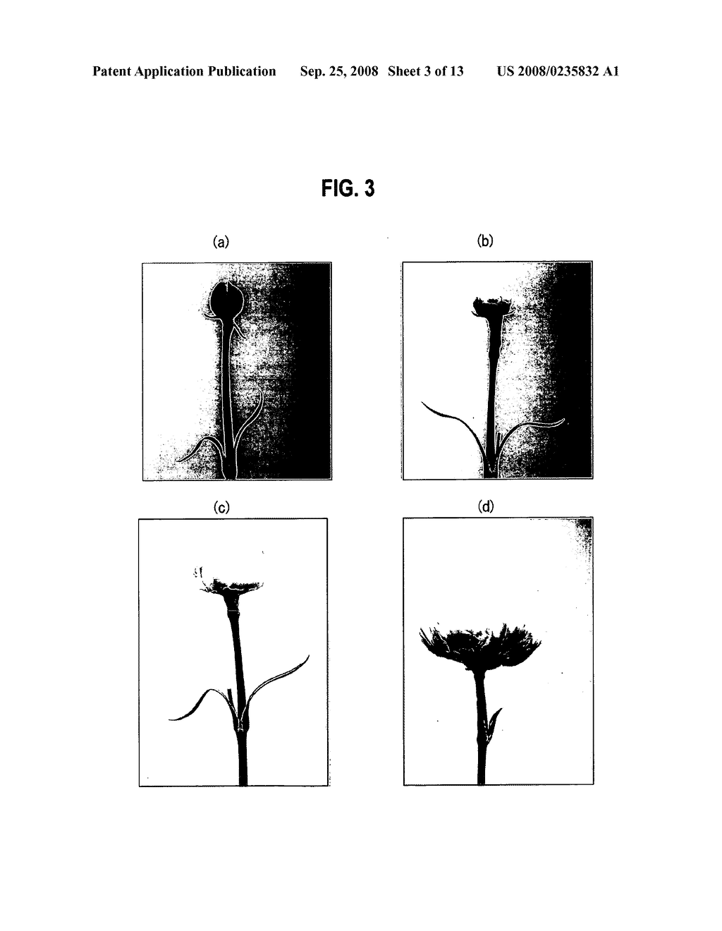 Cultivation Method of Flowering Plant, Flowering Plant Obtained by the Cultivation Method, Processing Method of Cut Flower and Cut Flower Obtained by the Processing Method - diagram, schematic, and image 04