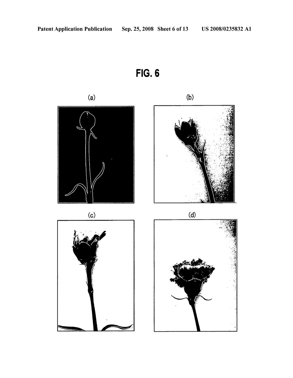 Cultivation Method of Flowering Plant, Flowering Plant Obtained by the Cultivation Method, Processing Method of Cut Flower and Cut Flower Obtained by the Processing Method - diagram, schematic, and image 07