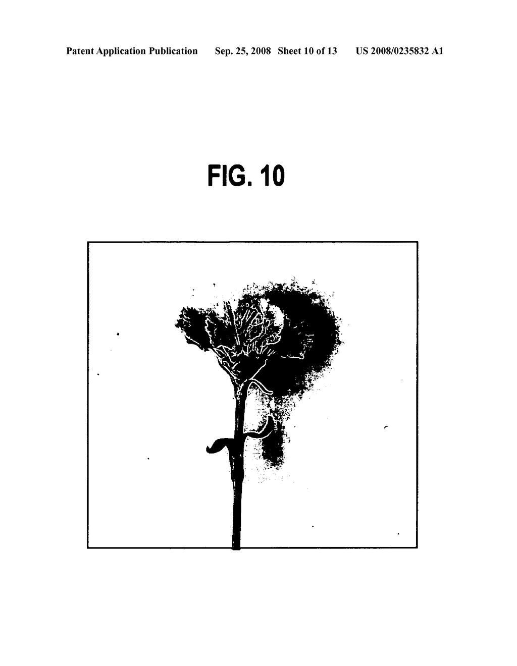 Cultivation Method of Flowering Plant, Flowering Plant Obtained by the Cultivation Method, Processing Method of Cut Flower and Cut Flower Obtained by the Processing Method - diagram, schematic, and image 11