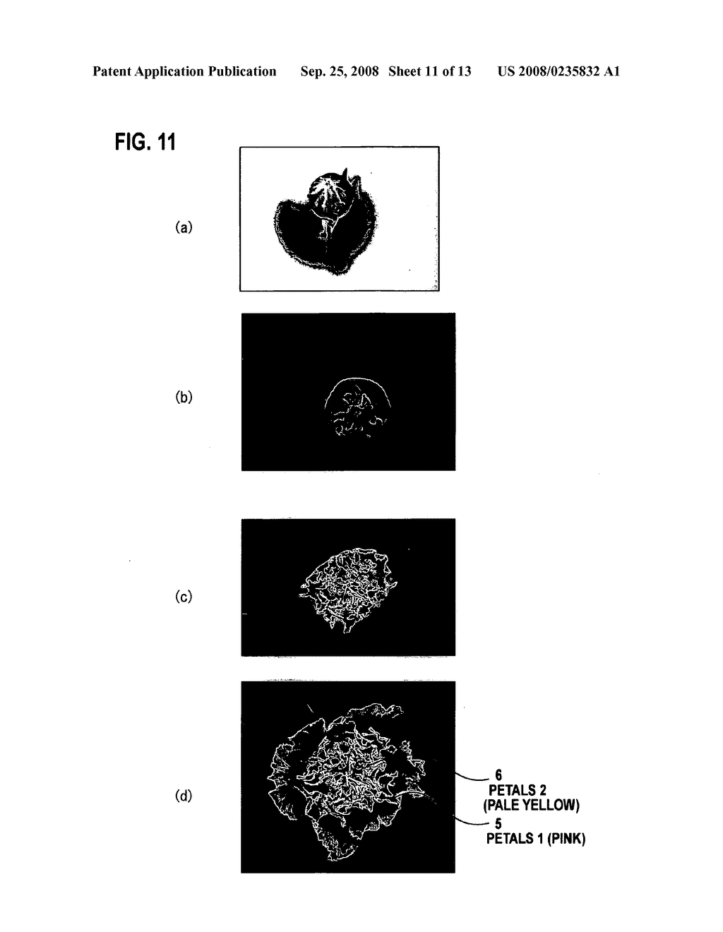 Cultivation Method of Flowering Plant, Flowering Plant Obtained by the Cultivation Method, Processing Method of Cut Flower and Cut Flower Obtained by the Processing Method - diagram, schematic, and image 12
