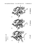 Crystal structures of human peptide deformylase diagram and image