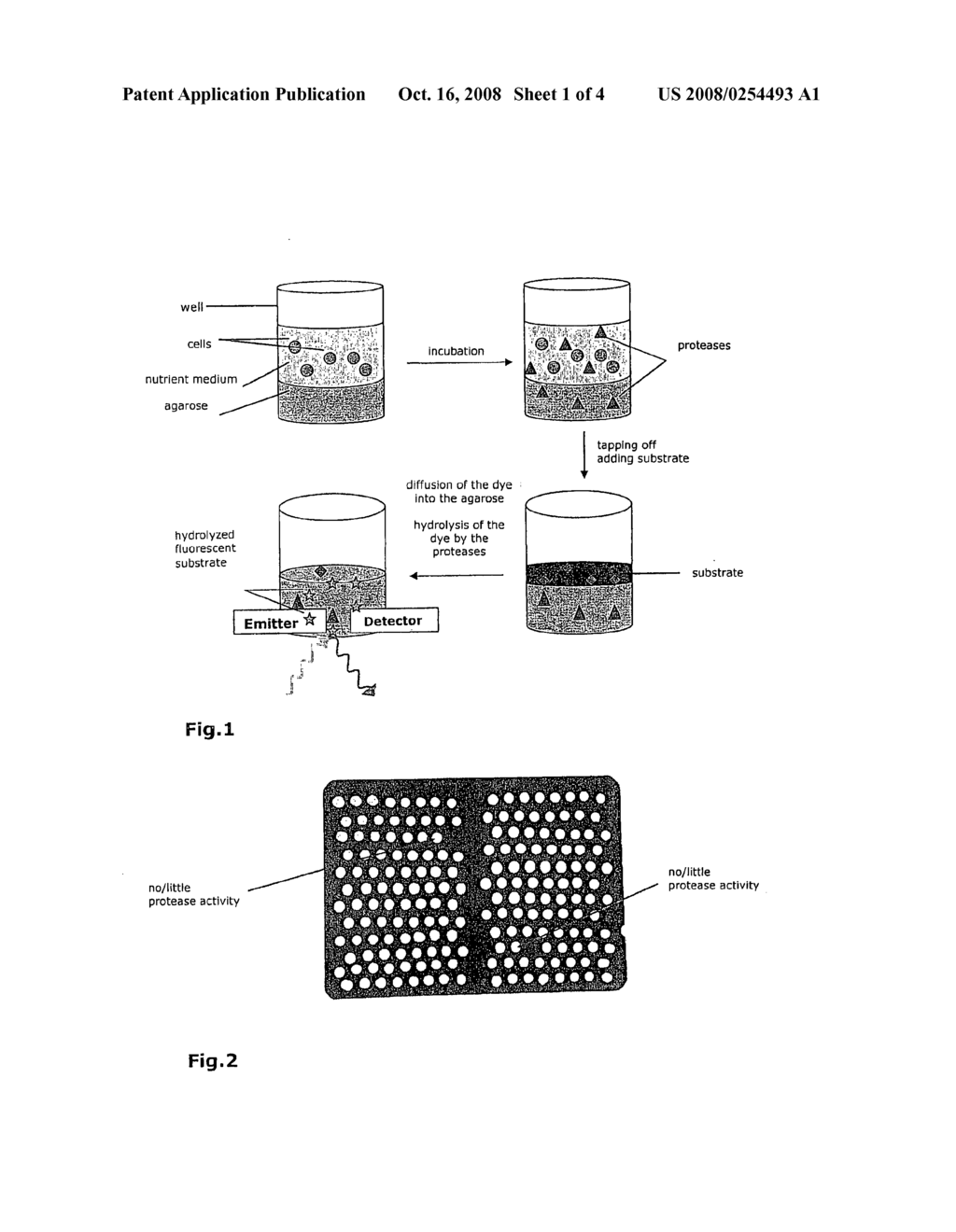 Screening Method Identifying Protease Secretion-Deficient Mutants of Microorganisms - diagram, schematic, and image 02