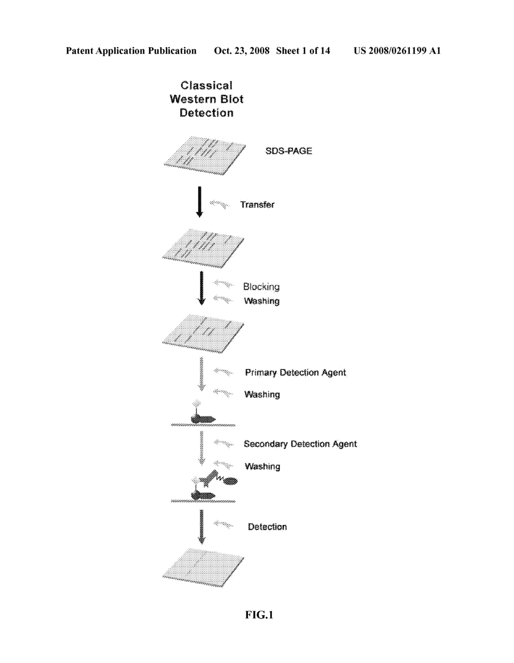 RAPID DETECTION PROCESSES AND RELATED COMPOSITIONS - diagram, schematic, and image 02