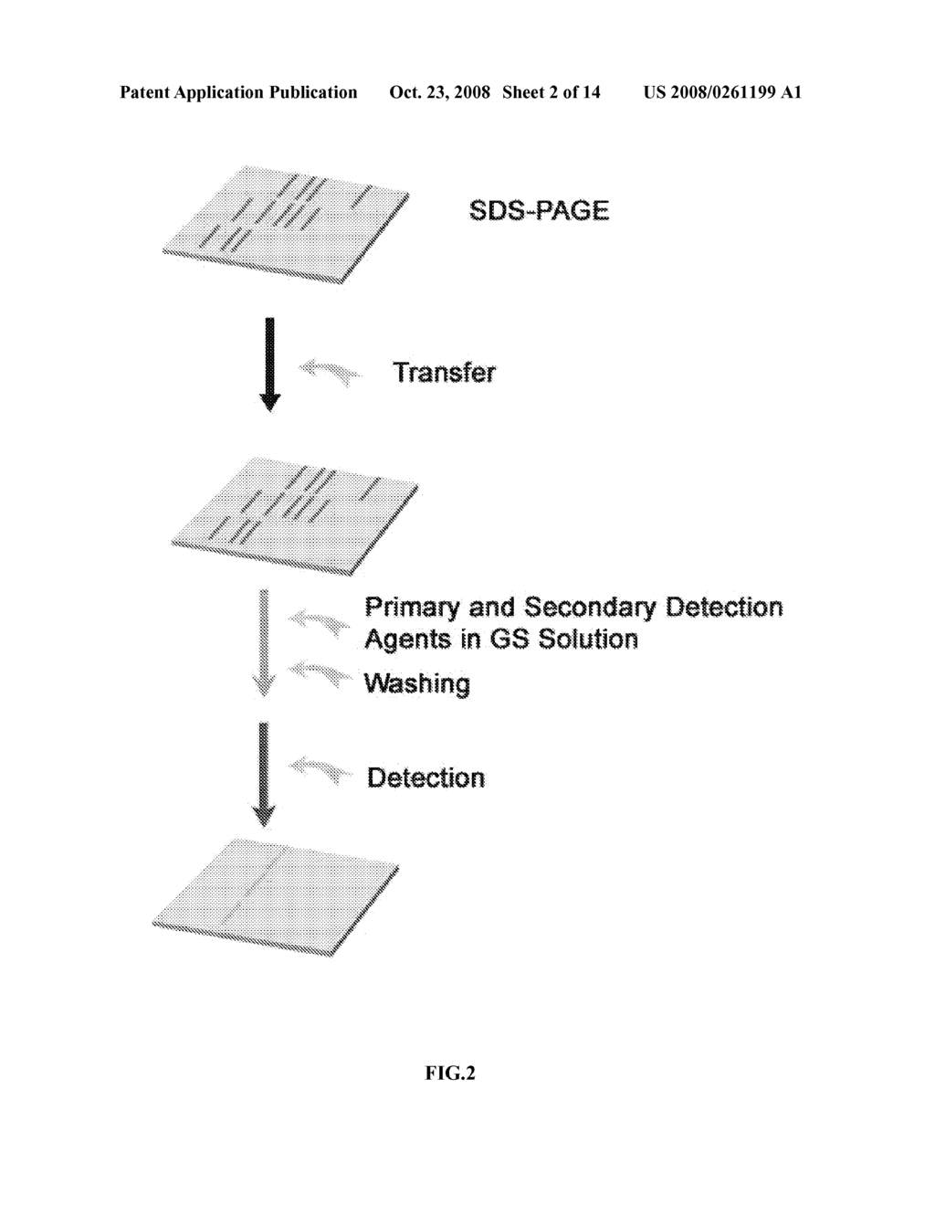 RAPID DETECTION PROCESSES AND RELATED COMPOSITIONS - diagram, schematic, and image 03