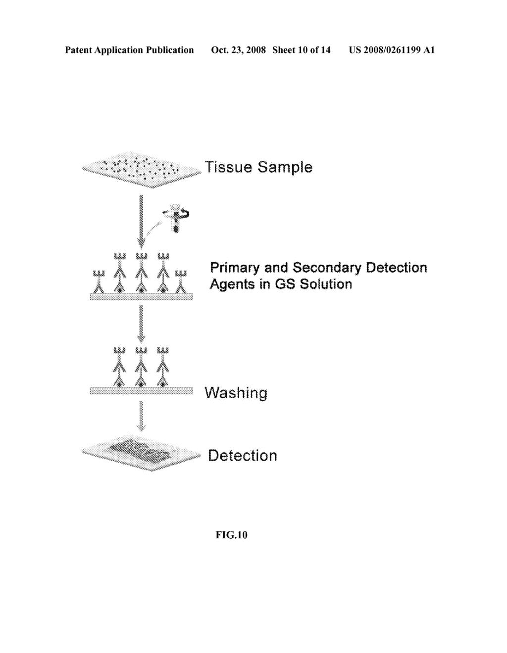 RAPID DETECTION PROCESSES AND RELATED COMPOSITIONS - diagram, schematic, and image 11