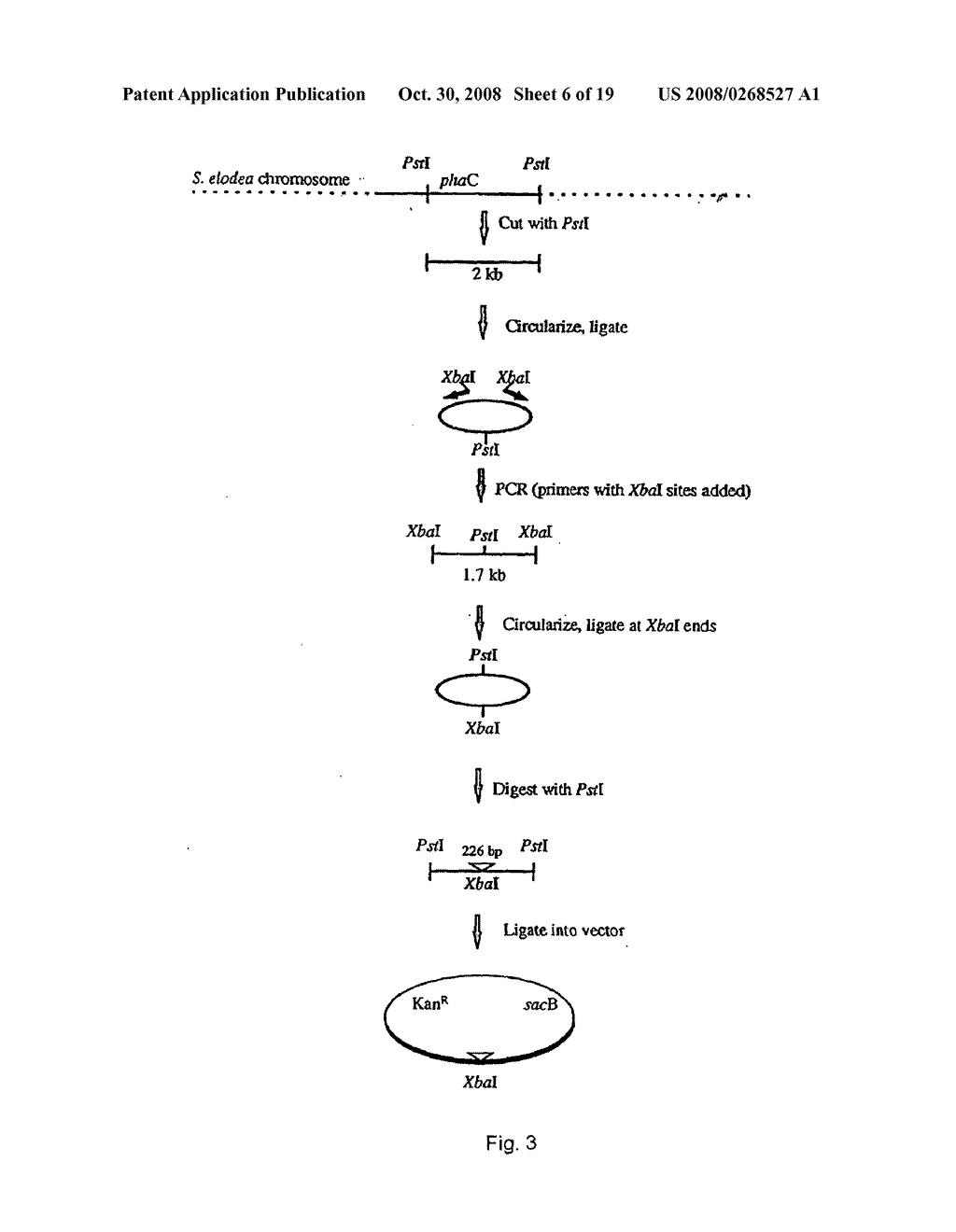 Mutant bacterial strains of the genus sphingomonas deficient in production of polyhydroxybutyrate and a process of clarification of sphingans and compositions thereof - diagram, schematic, and image 07
