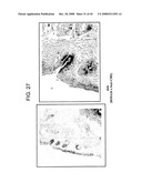 Murine Stem Cells and Applications Thereof diagram and image