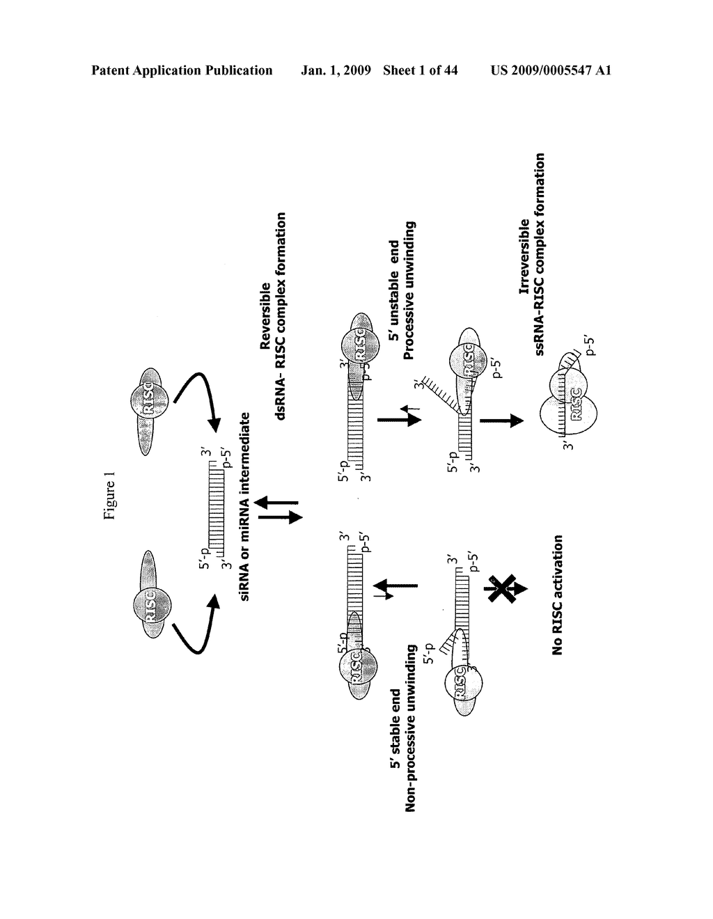 siRNa targeting neuropilin 1 (NRP1) - diagram, schematic, and image 02