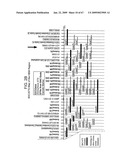 Transgenic animal model of bone mass modulation diagram and image