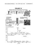 Antibodies at T cell receptor mimics, methods of production and uses thereof diagram and image