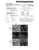 Novel Neural Cell Specific Promoter And Baculovirus And Method For Gene Delivery diagram and image