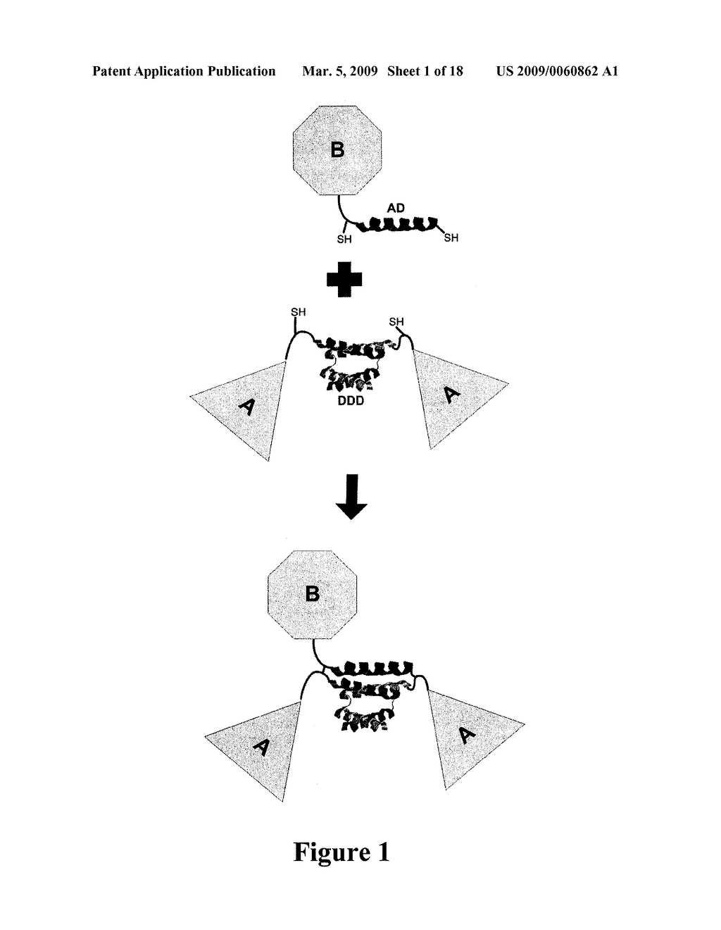 PEGylation by the Dock and Lock (DNL) Technique - diagram, schematic, and image 02