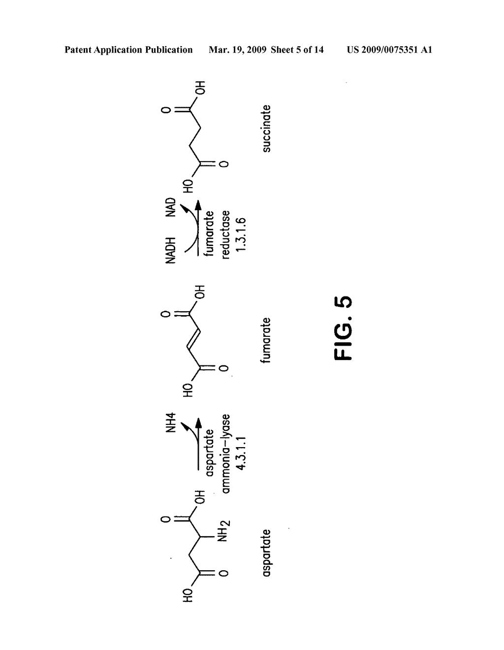 COMPOSITIONS AND METHODS FOR THE BIOSYNTHESIS OF 1,4-BUTANEDIOL AND ITS PRECURSORS - diagram, schematic, and image 06