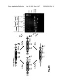 GENE TRAP CASSETTES FOR RANDOM AND TARGETED CONDITIONAL GENE INACTIVATION diagram and image