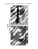 Method of Screening for Compounds That Alter Skin and/or Hair Pigmentation diagram and image