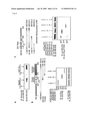 METHODS OF MODULATING SMYD3 FOR TREATMENT OF CANCER diagram and image