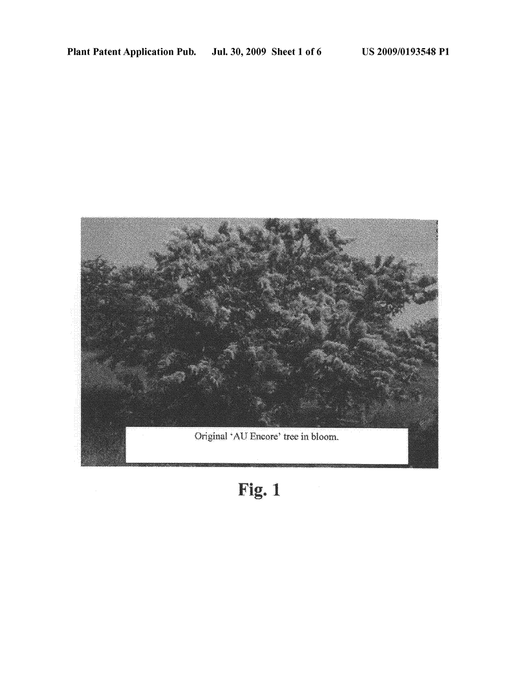 CHESTNUT PLANT NAMED 'AU ENCORE' - diagram, schematic, and image 04