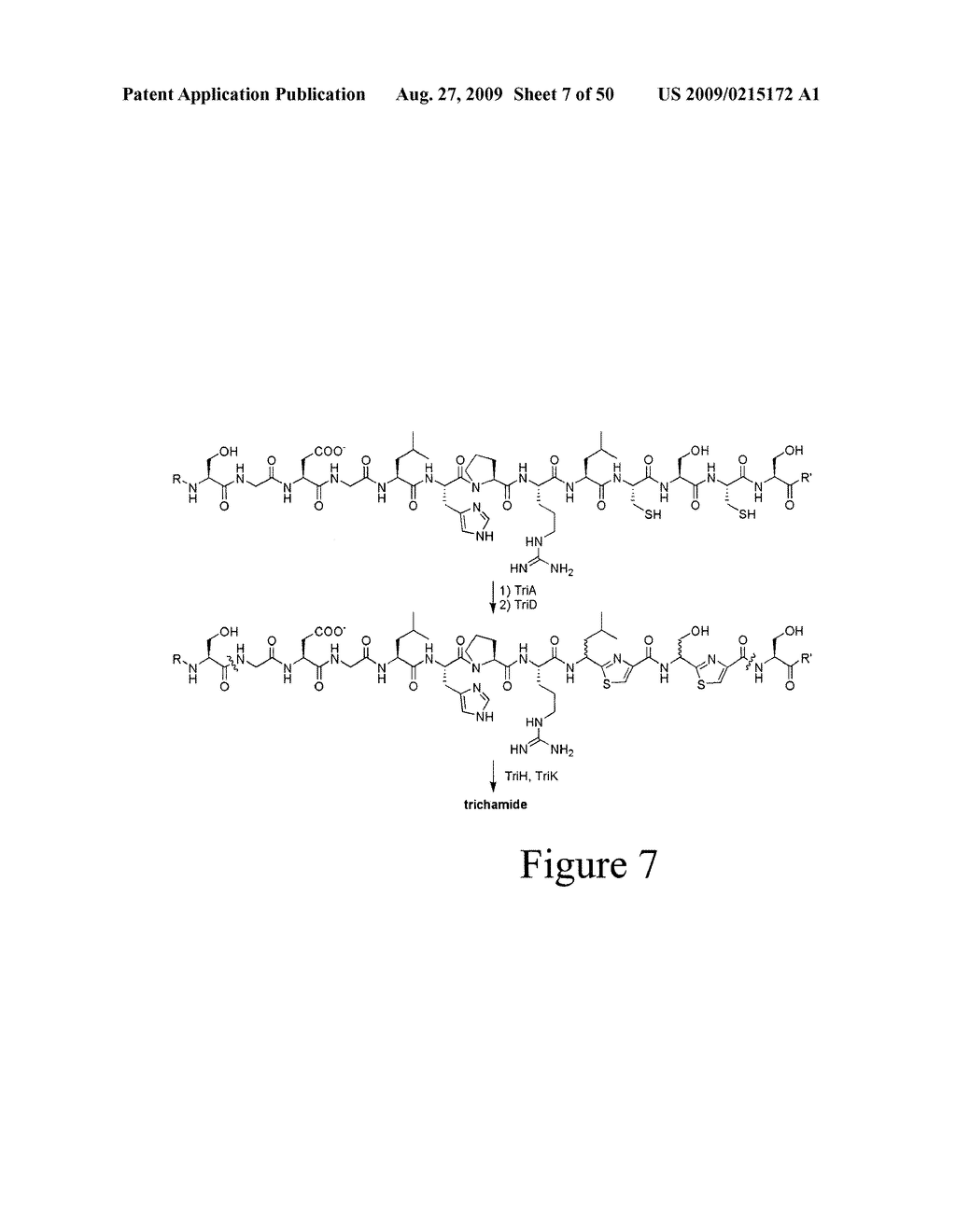 Methods and Compositions Related to Cyclic Peptide Synthesis - diagram, schematic, and image 08