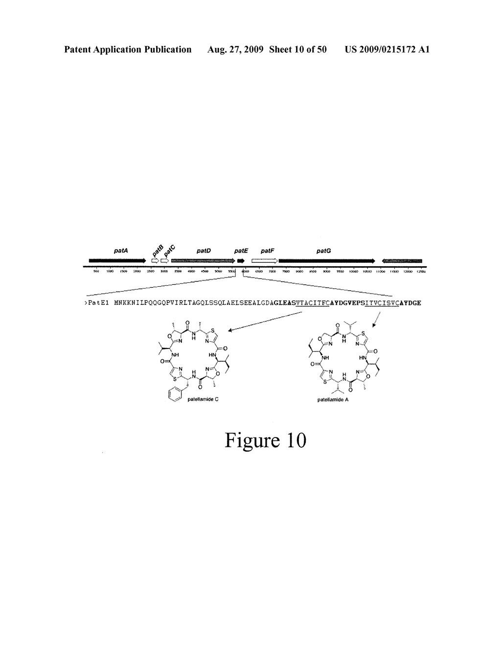 Methods and Compositions Related to Cyclic Peptide Synthesis - diagram, schematic, and image 11