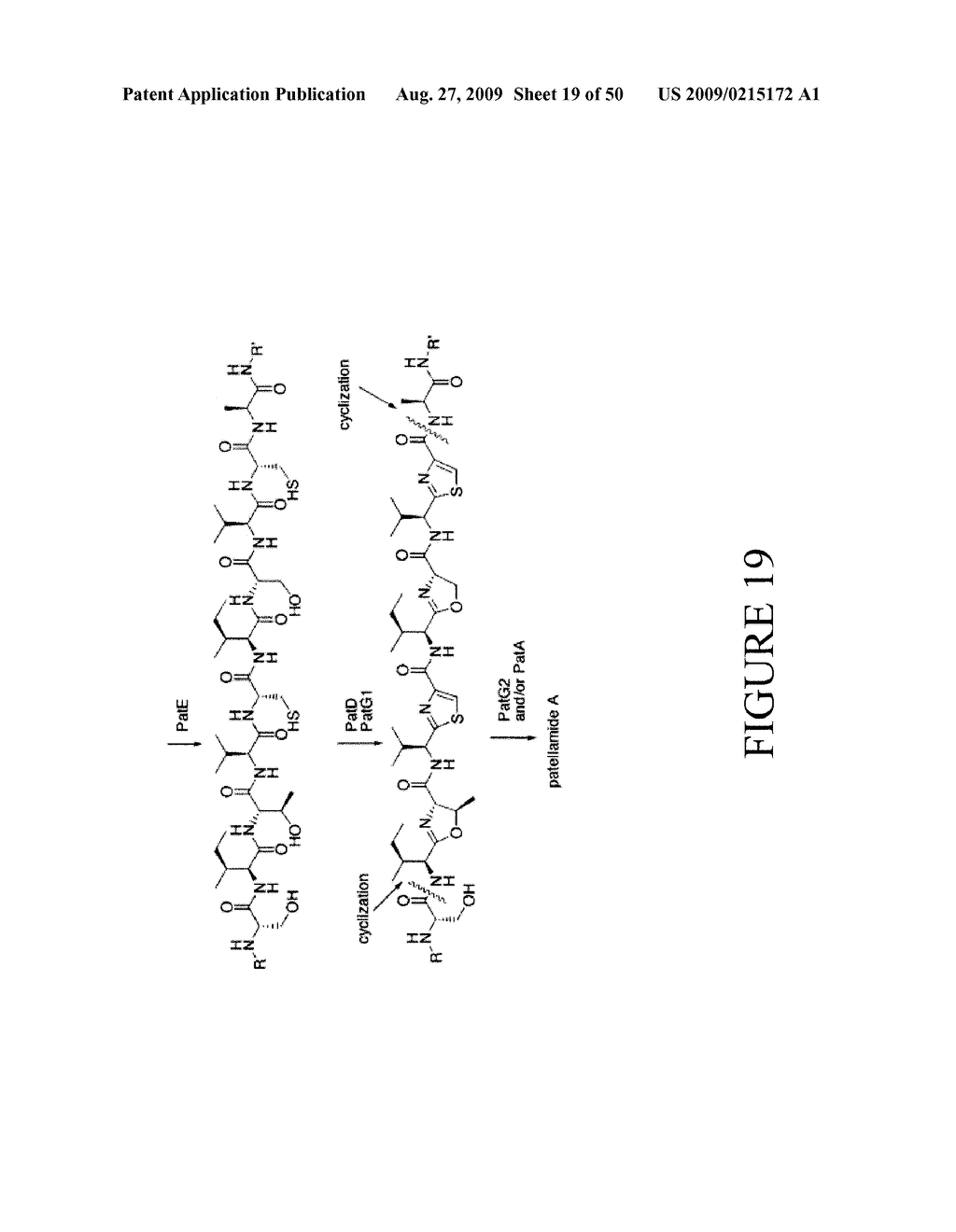 Methods and Compositions Related to Cyclic Peptide Synthesis - diagram, schematic, and image 20