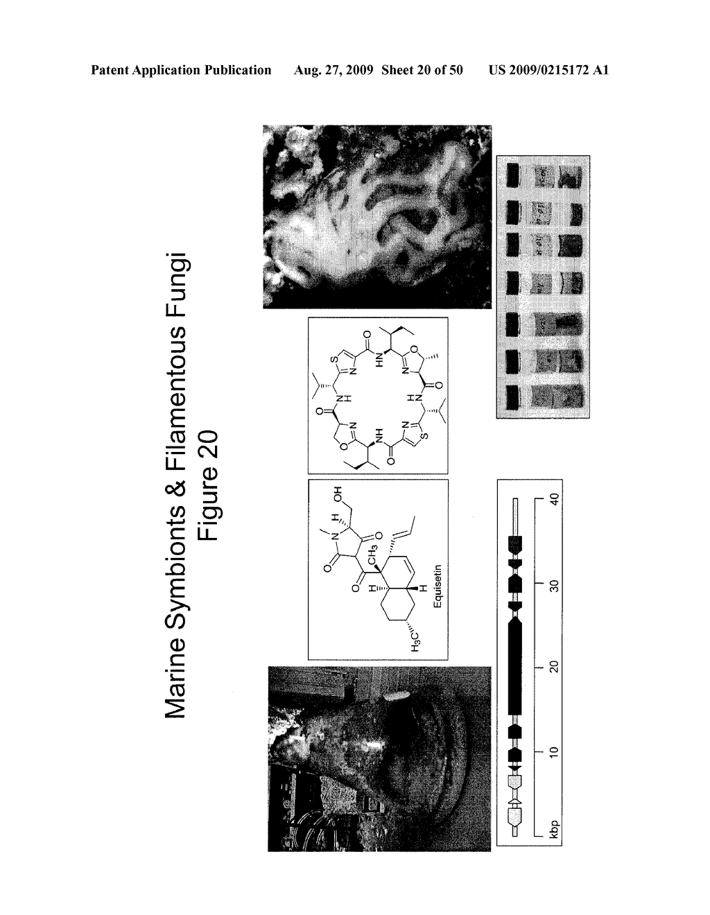 Methods and Compositions Related to Cyclic Peptide Synthesis - diagram, schematic, and image 21
