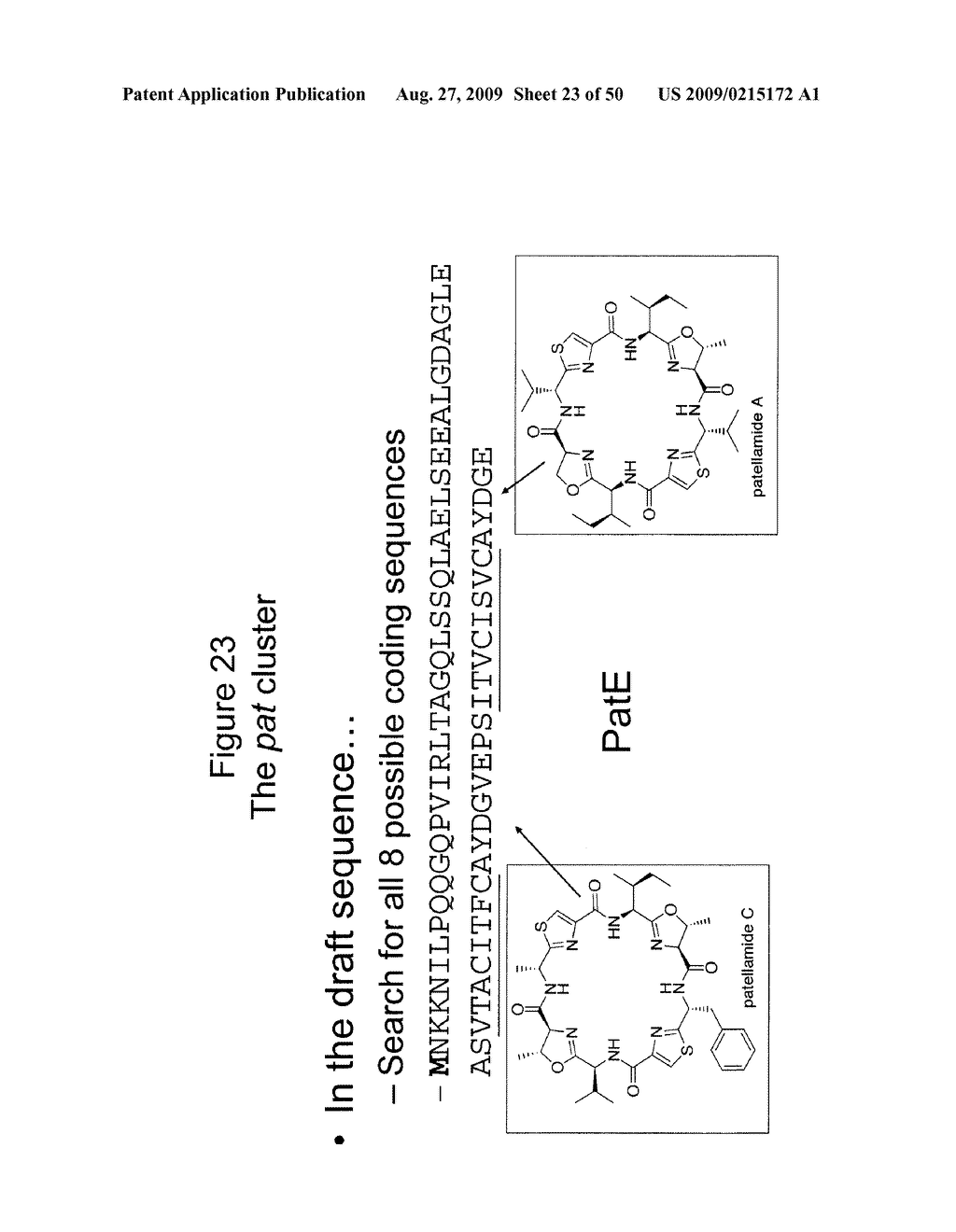 Methods and Compositions Related to Cyclic Peptide Synthesis - diagram, schematic, and image 24