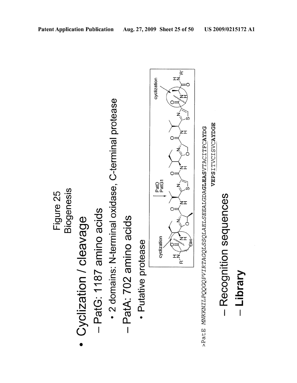 Methods and Compositions Related to Cyclic Peptide Synthesis - diagram, schematic, and image 26