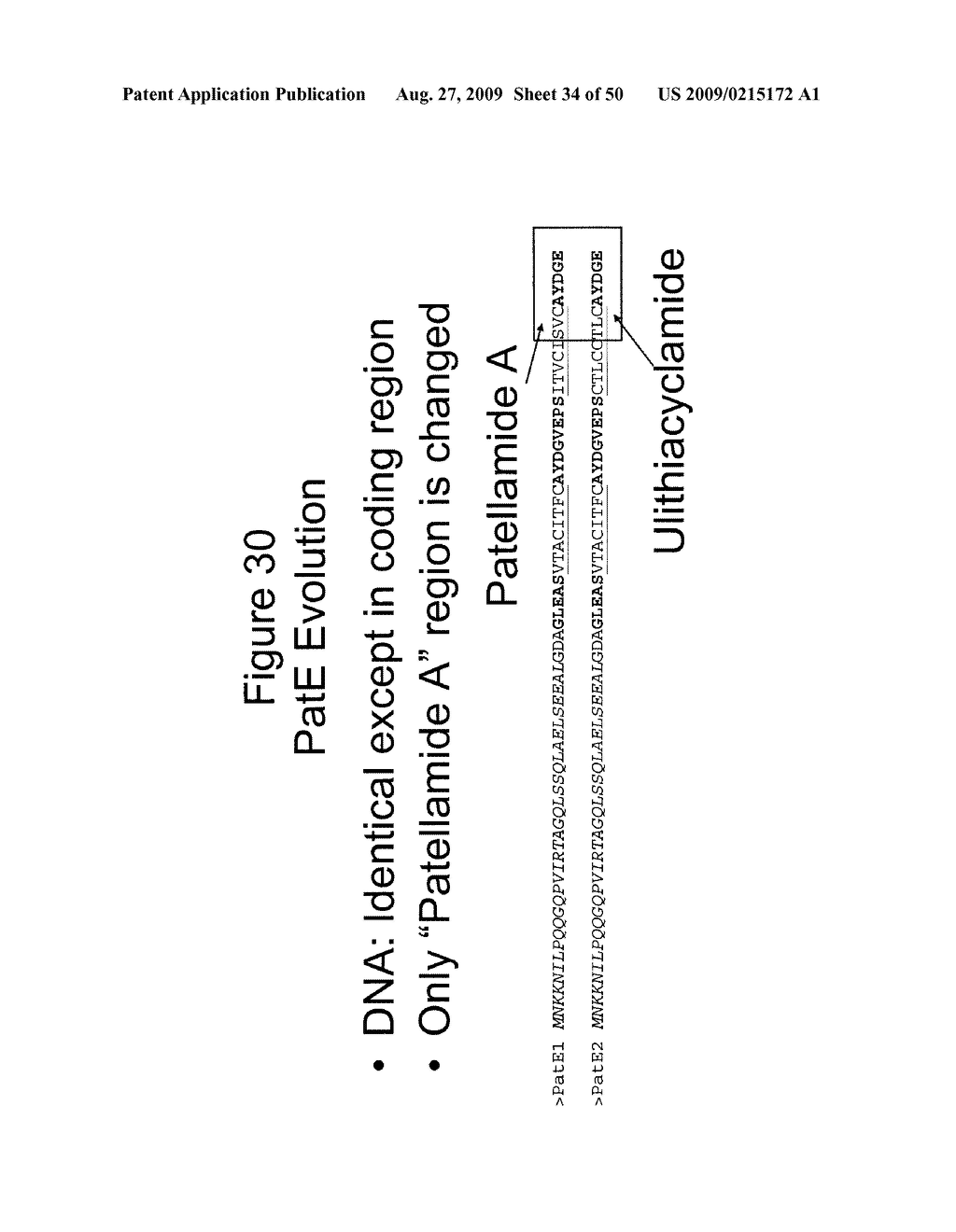 Methods and Compositions Related to Cyclic Peptide Synthesis - diagram, schematic, and image 35