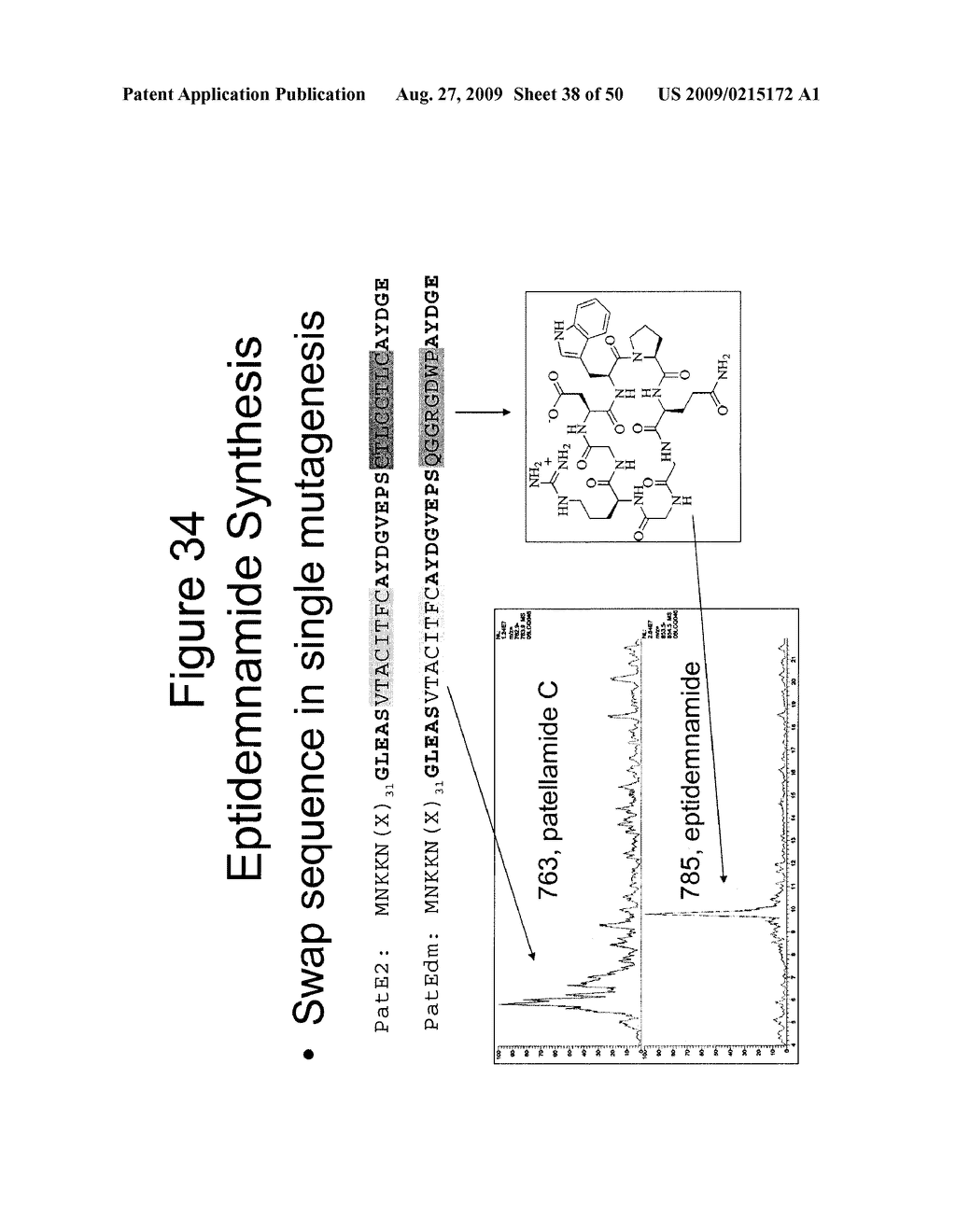 Methods and Compositions Related to Cyclic Peptide Synthesis - diagram, schematic, and image 39
