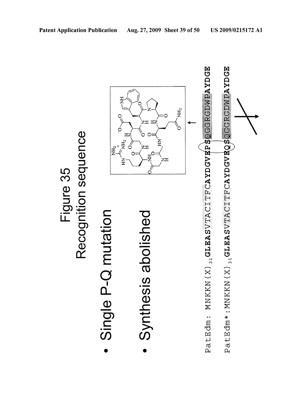 Methods and Compositions Related to Cyclic Peptide Synthesis - diagram, schematic, and image 40