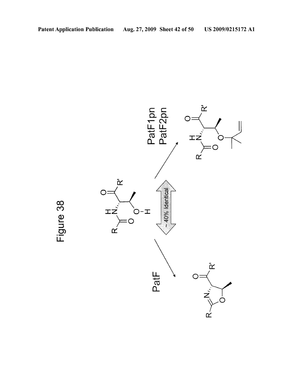Methods and Compositions Related to Cyclic Peptide Synthesis - diagram, schematic, and image 43