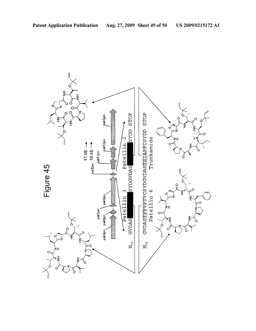 Methods and Compositions Related to Cyclic Peptide Synthesis - diagram, schematic, and image 50