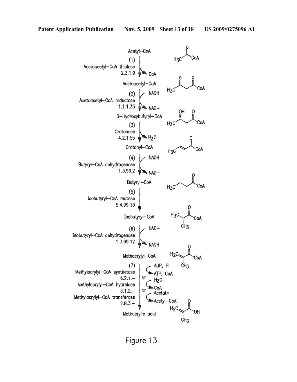 MICROORGANISMS FOR THE PRODUCTION OF METHACRYLIC ACID - diagram, schematic, and image 14