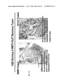 METHODS FOR THE TREATMENT OF CANCER USING PIPERLONGUMINE AND PIPERLONGUMINE ANALOGS diagram and image
