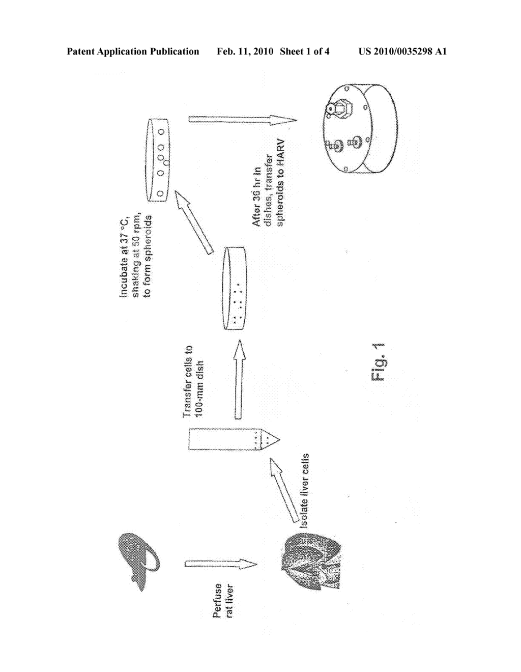 Hepatocyte Bioreactor System For Long Term Culture of Functional Hepatocyte Spheroids - diagram, schematic, and image 02