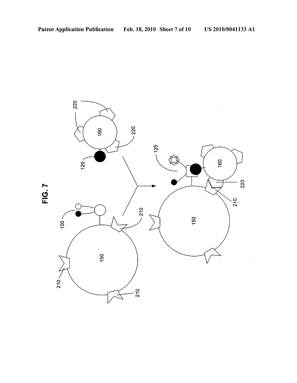 Biological targeting compositions and methods of using the same - diagram, schematic, and image 08
