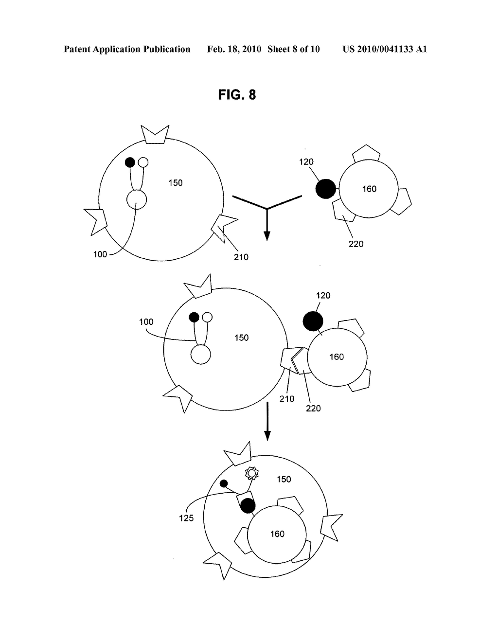Biological targeting compositions and methods of using the same - diagram, schematic, and image 09