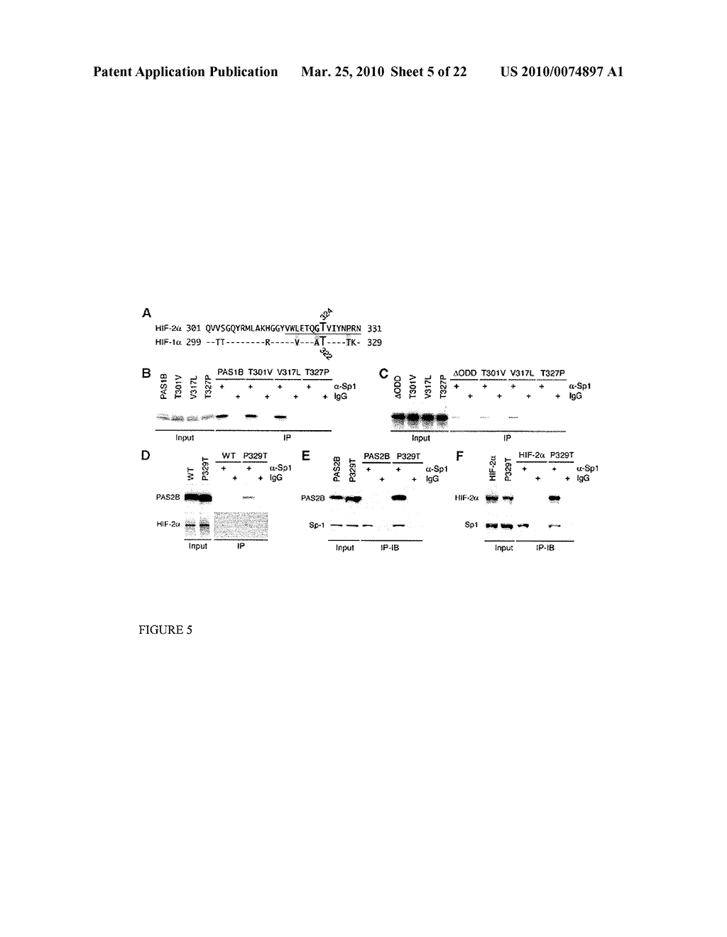 Methods and Compositions related to HIF-1 alpha - diagram, schematic, and image 06