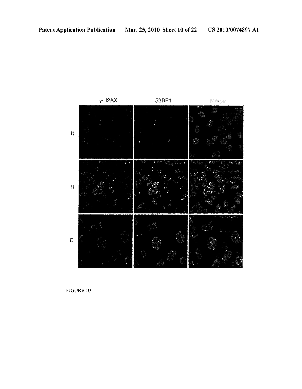 Methods and Compositions related to HIF-1 alpha - diagram, schematic, and image 11