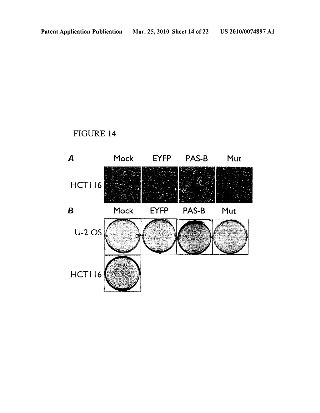 Methods and Compositions related to HIF-1 alpha - diagram, schematic, and image 15