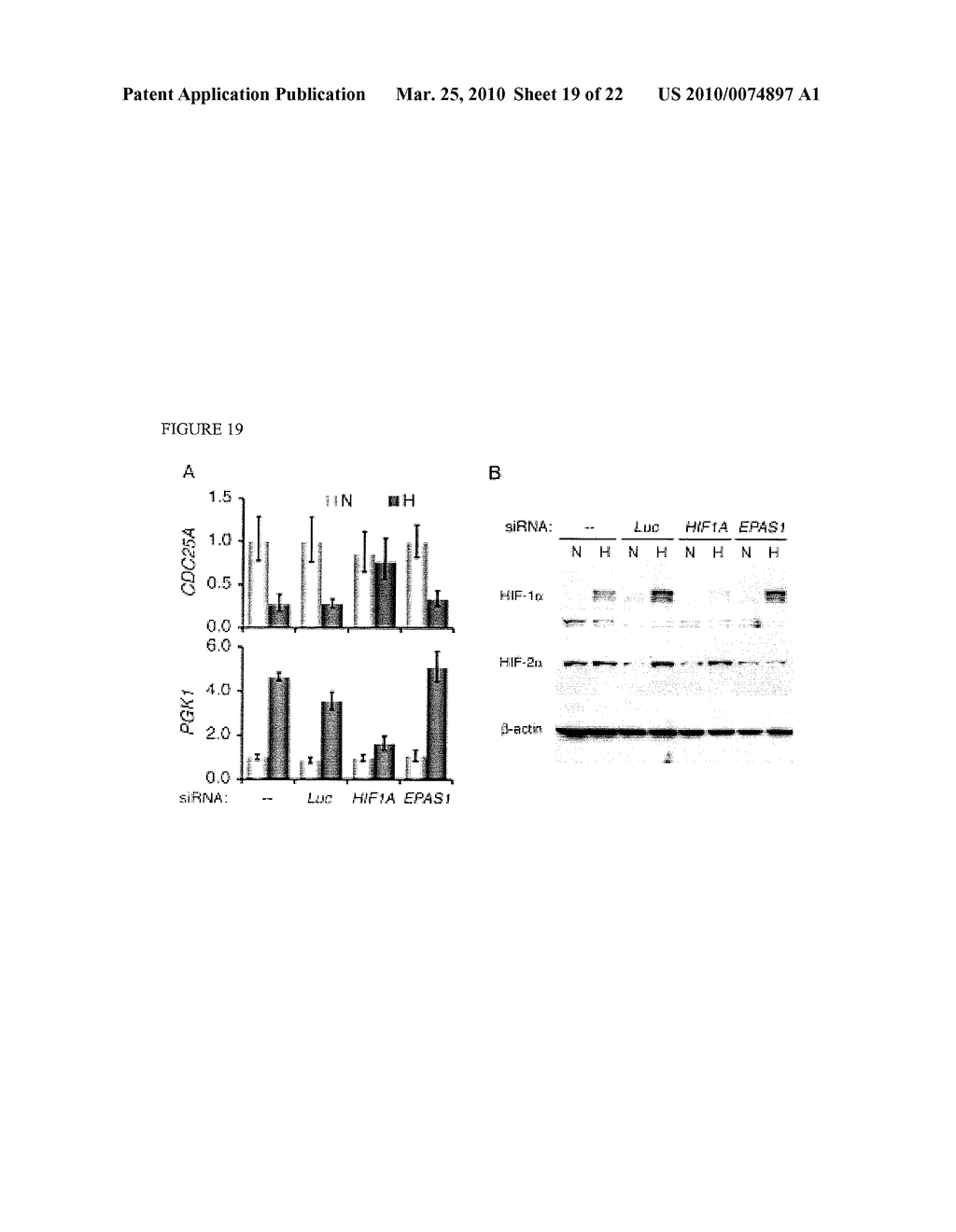 Methods and Compositions related to HIF-1 alpha - diagram, schematic, and image 20