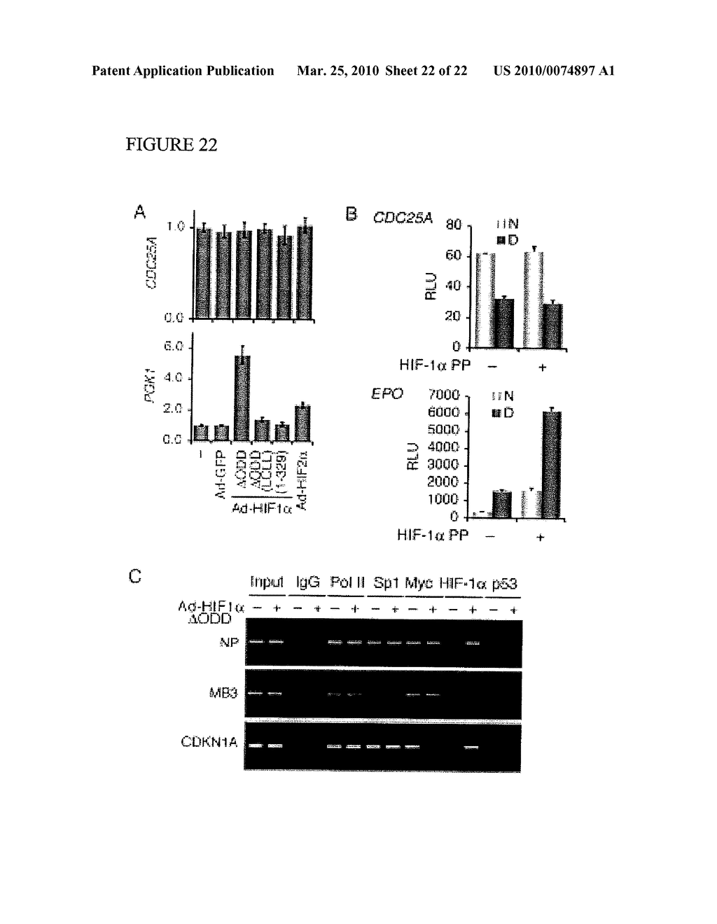 Methods and Compositions related to HIF-1 alpha - diagram, schematic, and image 23