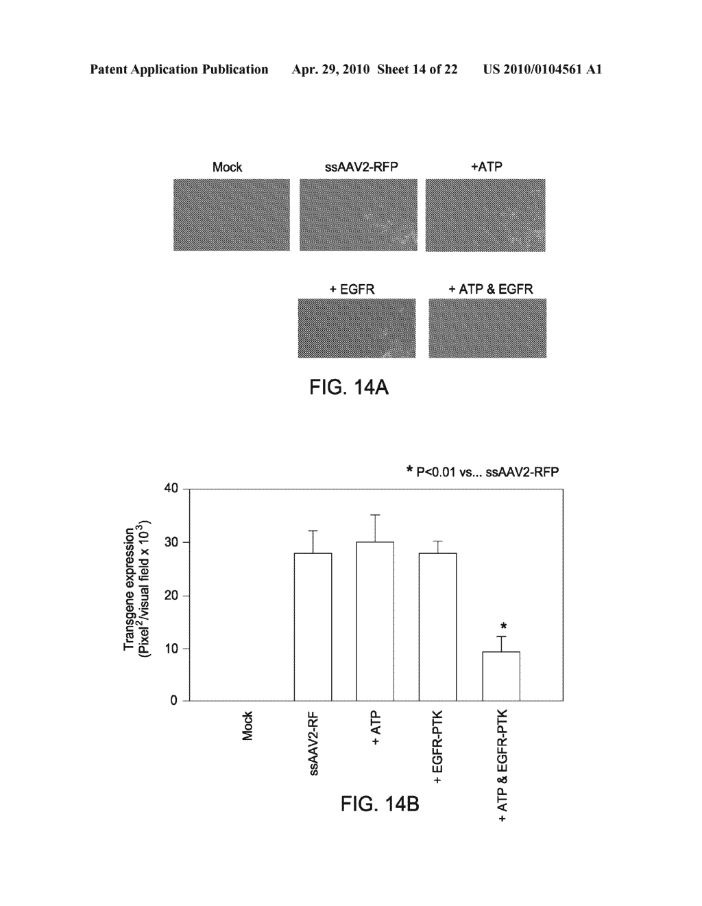 TYROSINE-MODIFIED RECOMBINANT rAAV VECTOR COMPOSITIONS AND METHODS FOR USE - diagram, schematic, and image 15