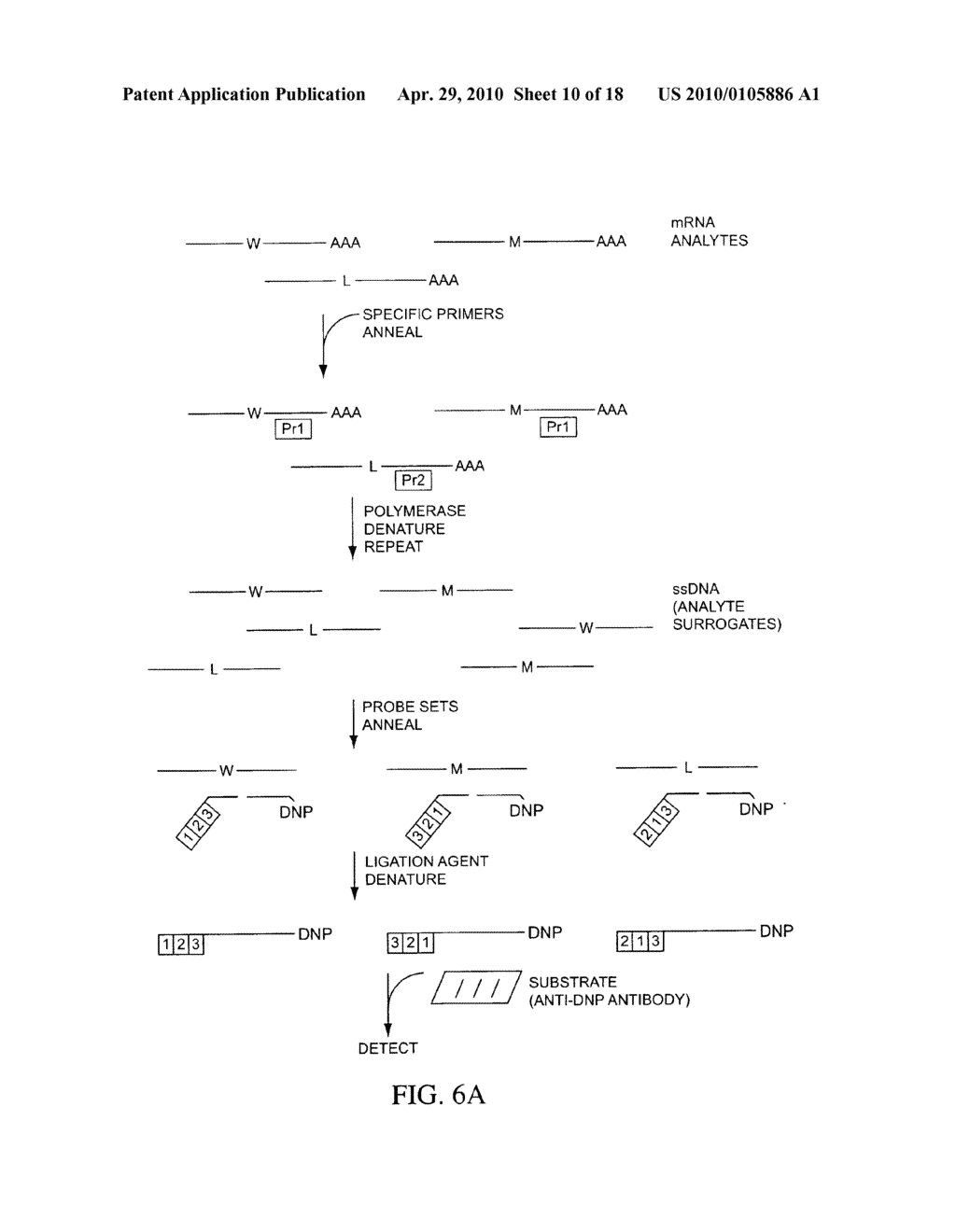 COMPOSITIONS, METHODS, AND KITS FOR FABRICATING CODED MOLECULAR TAGS - diagram, schematic, and image 11
