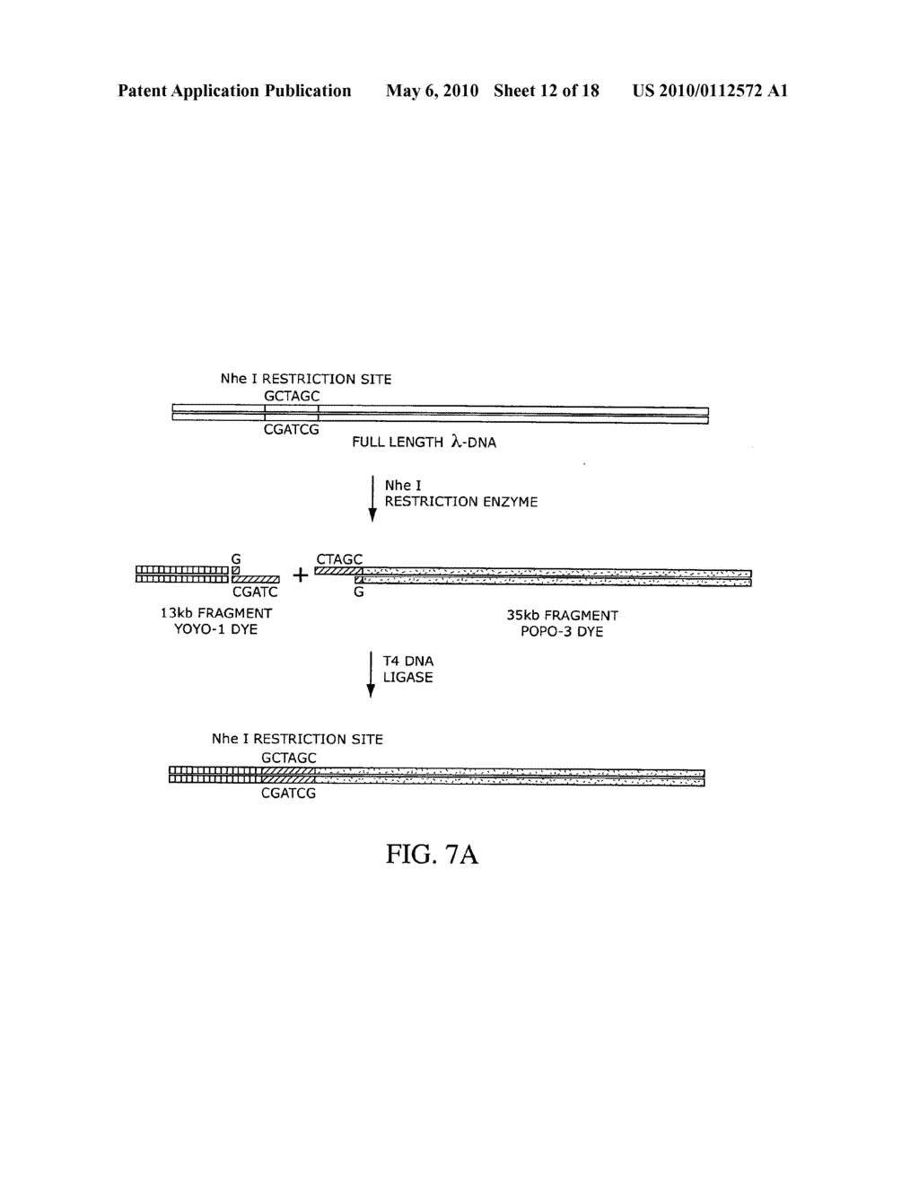 COMPOSITIONS, METHODS, AND KITS FOR FABRICATING CODED MOLECULAR TAGS - diagram, schematic, and image 13