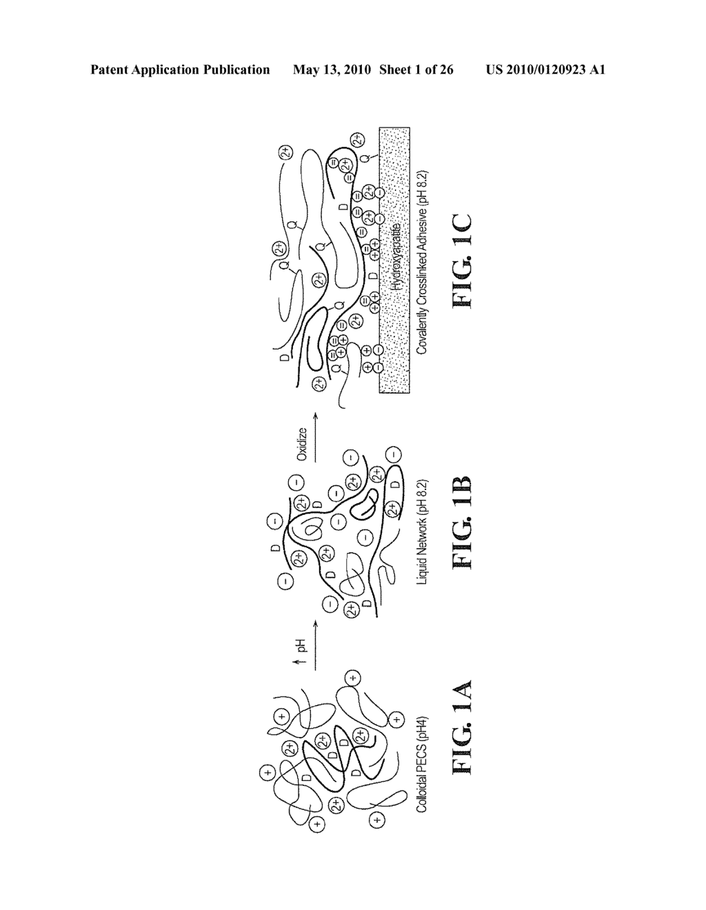 ADHESIVE COMPLEX COACERVATES AND METHODS OF MAKING AND USING THEREOF - diagram, schematic, and image 02