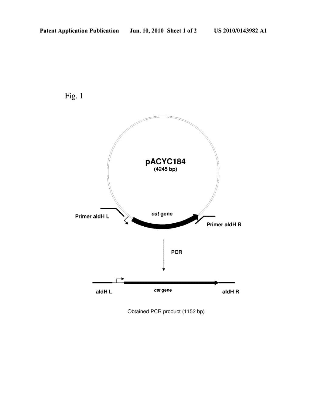 METHOD FOR PRODUCING AN L-AMINO ACID USING A BACTERIUM OF ENTEROBACTERIACEAE FAMILY WITH ATTENUATED EXPRESSION OF THE aldH GENE - diagram, schematic, and image 02