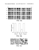 Methods for Detecting Epigenetic Modifications diagram and image