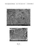 DEPOSITION OF NANOCRYSTALLINE CALCITE ON SURFACES BY A TISSUE AND CELLULAR BIOMINERALIZATION diagram and image
