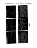 Compositions and Methods for Inducing Neuronal Differentiation diagram and image